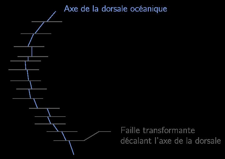 Schéma du décalage de l'axe d'une dorsale océanique par les failles transformantes