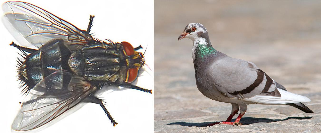 Des animaux qui possèdent des ailes
