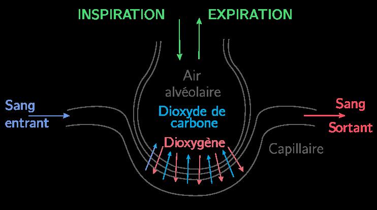L 39 limination des d chets cours sciences de la vie et de - Dioxyde de carbone danger ...
