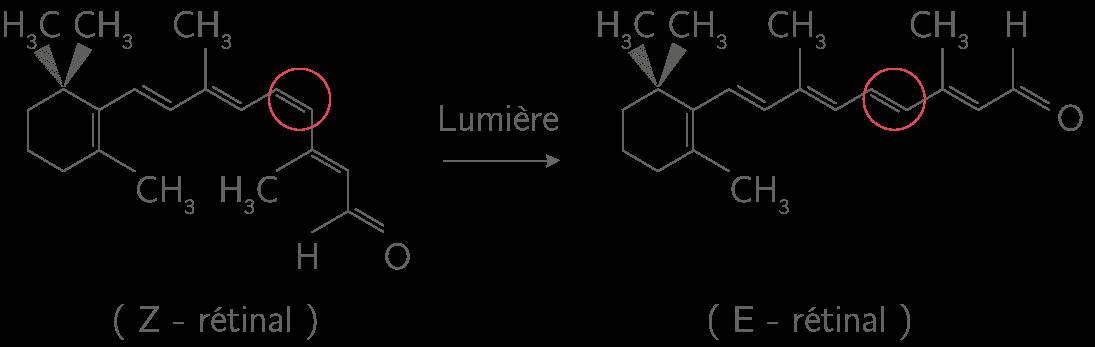 Isomérisation photochimique du Z-rétinal