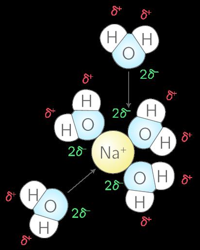 Dispersion des ions sodium dans l'eau