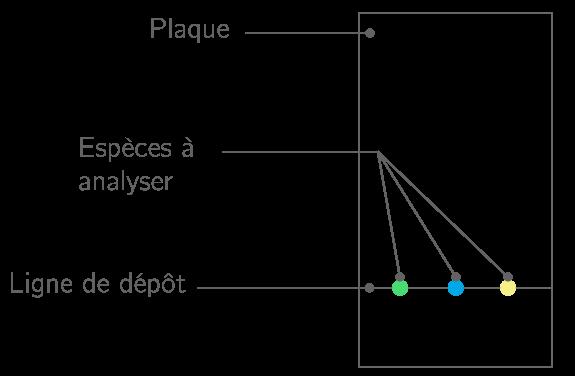 Chromatographie Sur Couche Mince Principe Sur Couche Mince