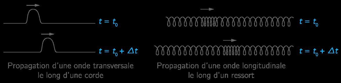 Différence entre onde longitudinale et onde transversale