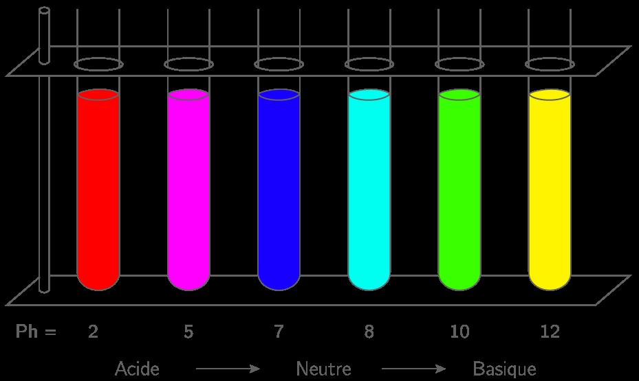 Influence du pH sur la couleur de l'extrait de chou rouge