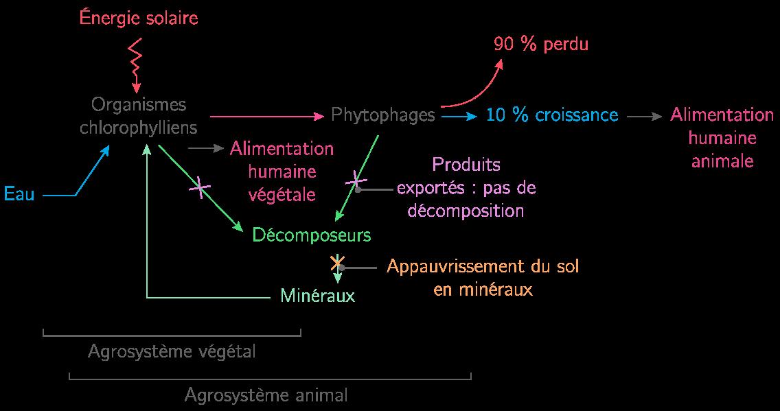 Comparaison d'agrosystèmes végétal et animal