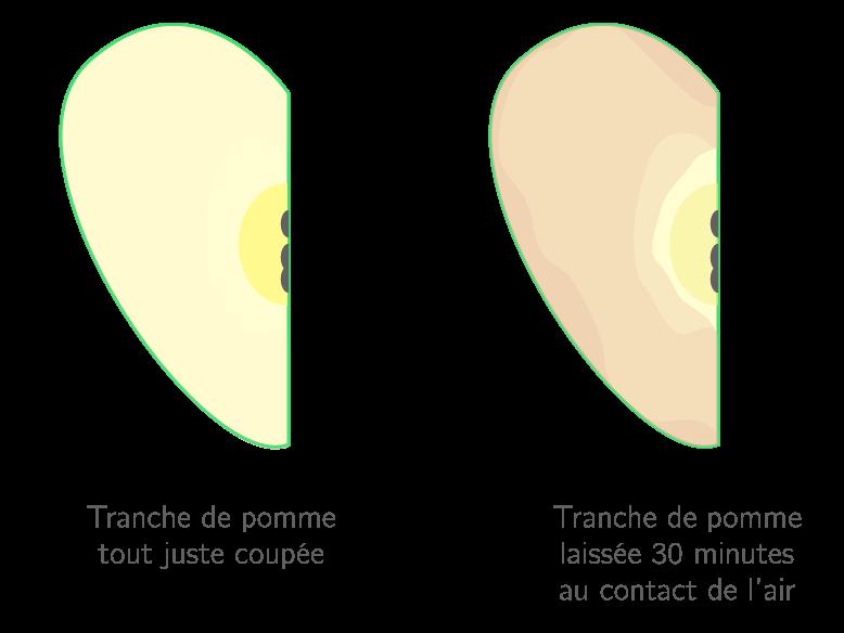 Oxydation d'une pomme coupée laissée à l'air