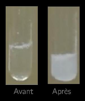 Reconnaître le gaz dissous dans un liquide - 5e - Exercice ...