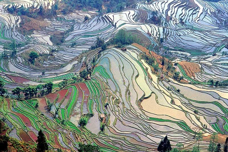 Terrasses aménagées pour la culture du riz