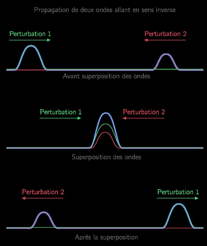 Propagation de deux ondes en sens inverse le long d'une corde
