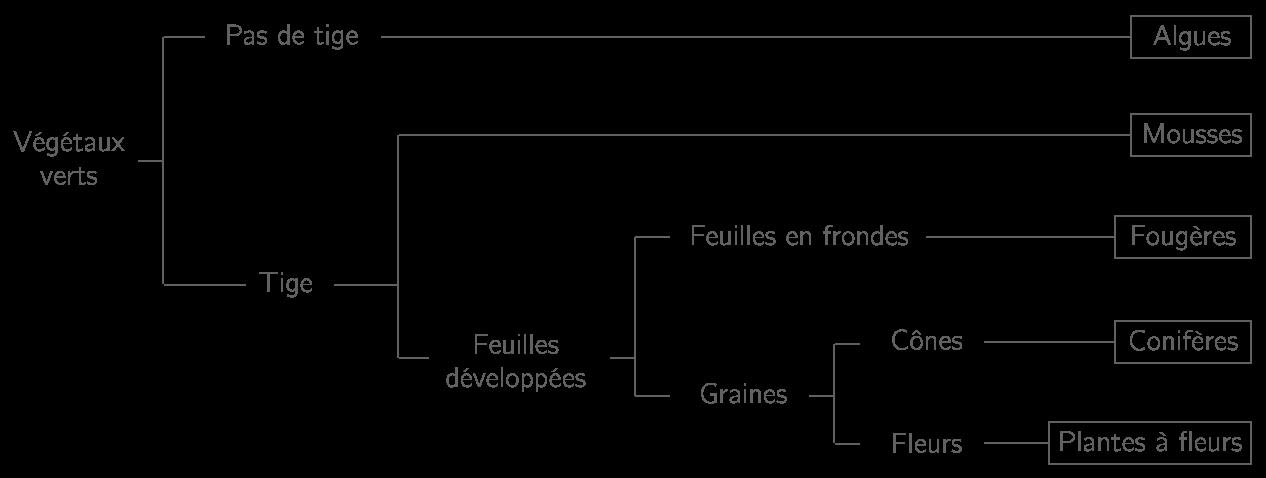 Classification des végétaux sous forme d'arbre de parenté