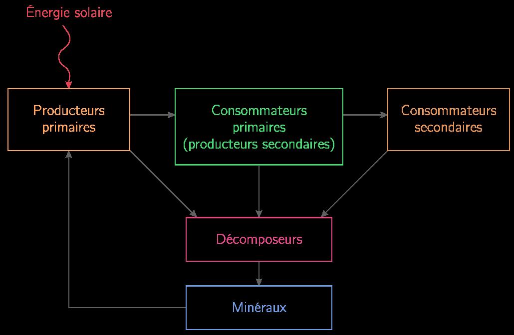 Schéma de la pyramide de productivité