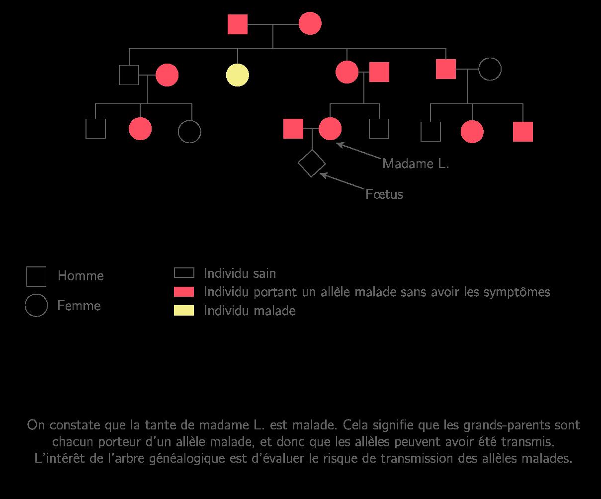 Arbre généalogique d'étude du risque de transmission de la mucoviscidose à un enfant à naître