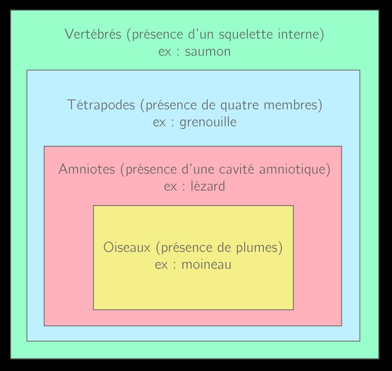 Représentation sous forme de groupes emboîtés des caractères partagés par différents groupes d'animaux, appartenant au groupe des vertébrés.