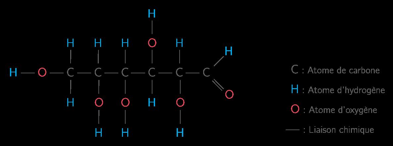 Représentation de la molécule de glucose