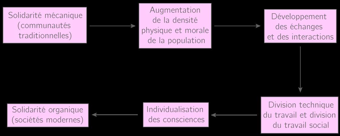 Le passage de la solidarité mécanique à la solidarité organique chez Durkheim