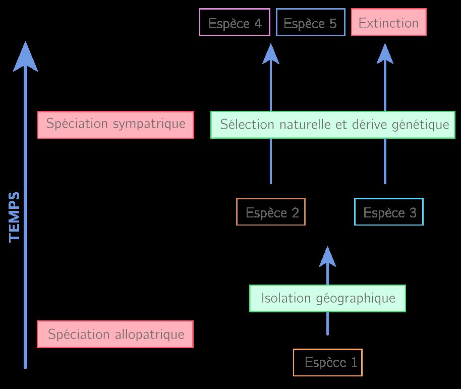 Les mécanismes de sélection au cours du temps
