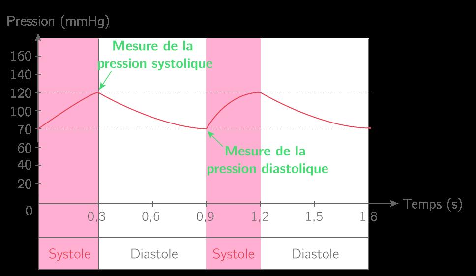 Variation de la pression artérielle associée au fonctionnement cardiaque