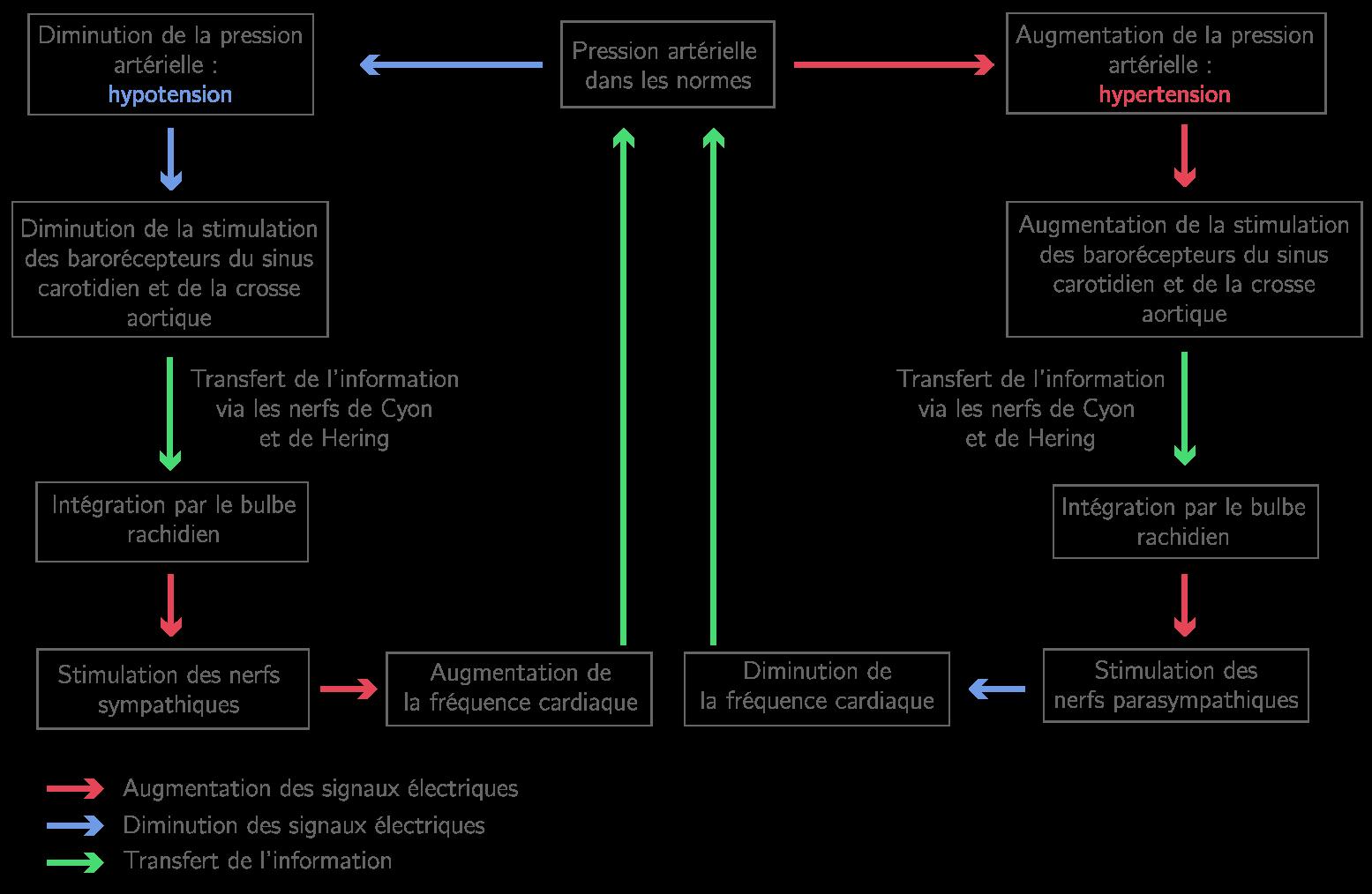 Organisation et gestion de données Mathématiques - Niveau ...