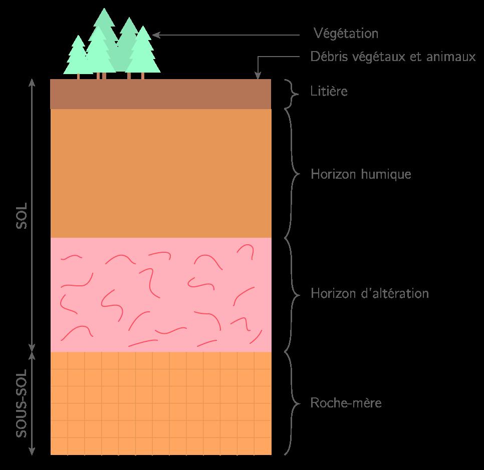 Coupe transversale d'un sol