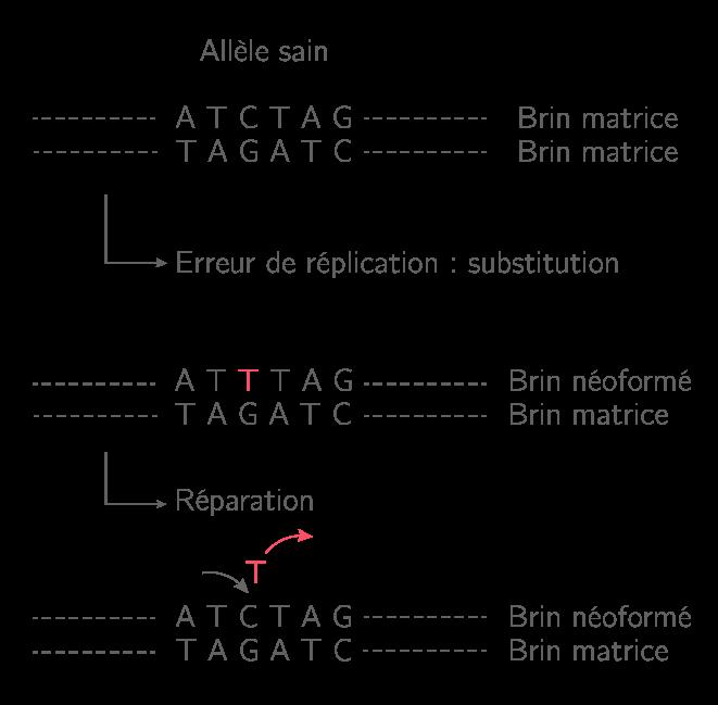 Les systèmes de réparation de l'ADN