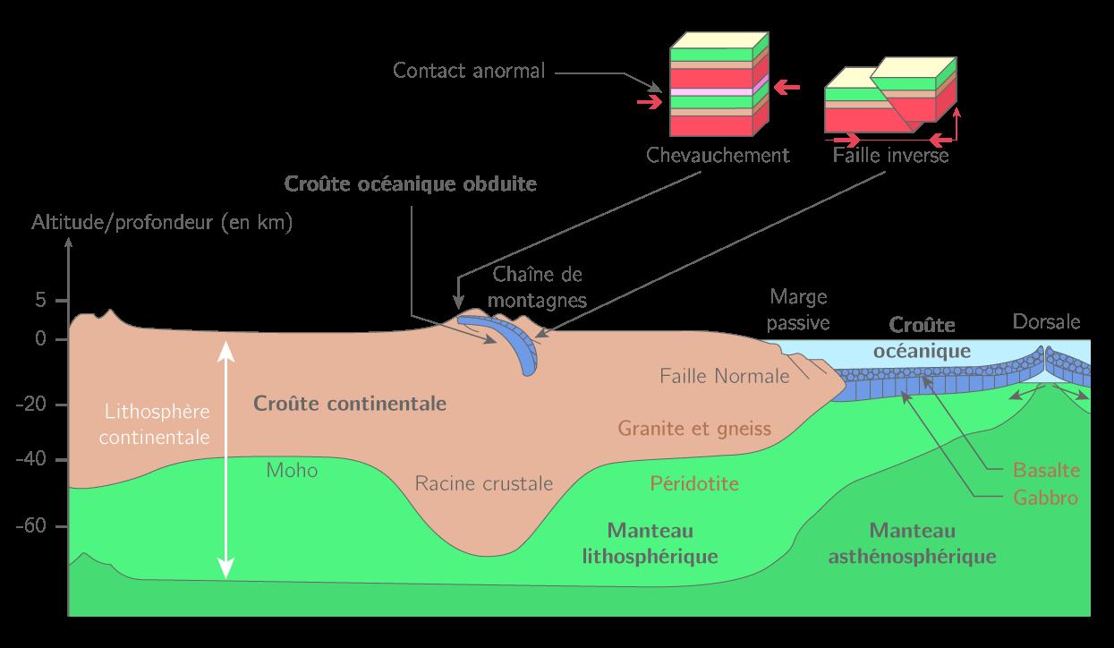 SVT Terminale S 34 Fiches Methodes Pour …