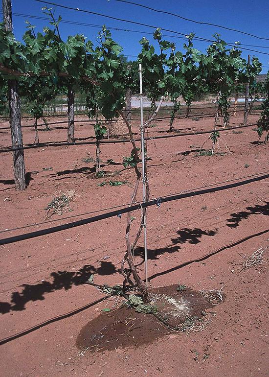 Système d'irrigation au goutte-à-goutte au Nouveau-Mexique