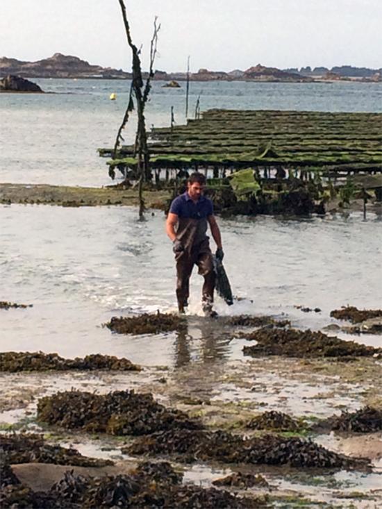 Ostréiculteur dans un parc à huîtres en Bretagne