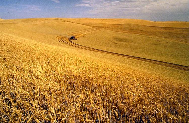 Culture de blé aux États-Unis