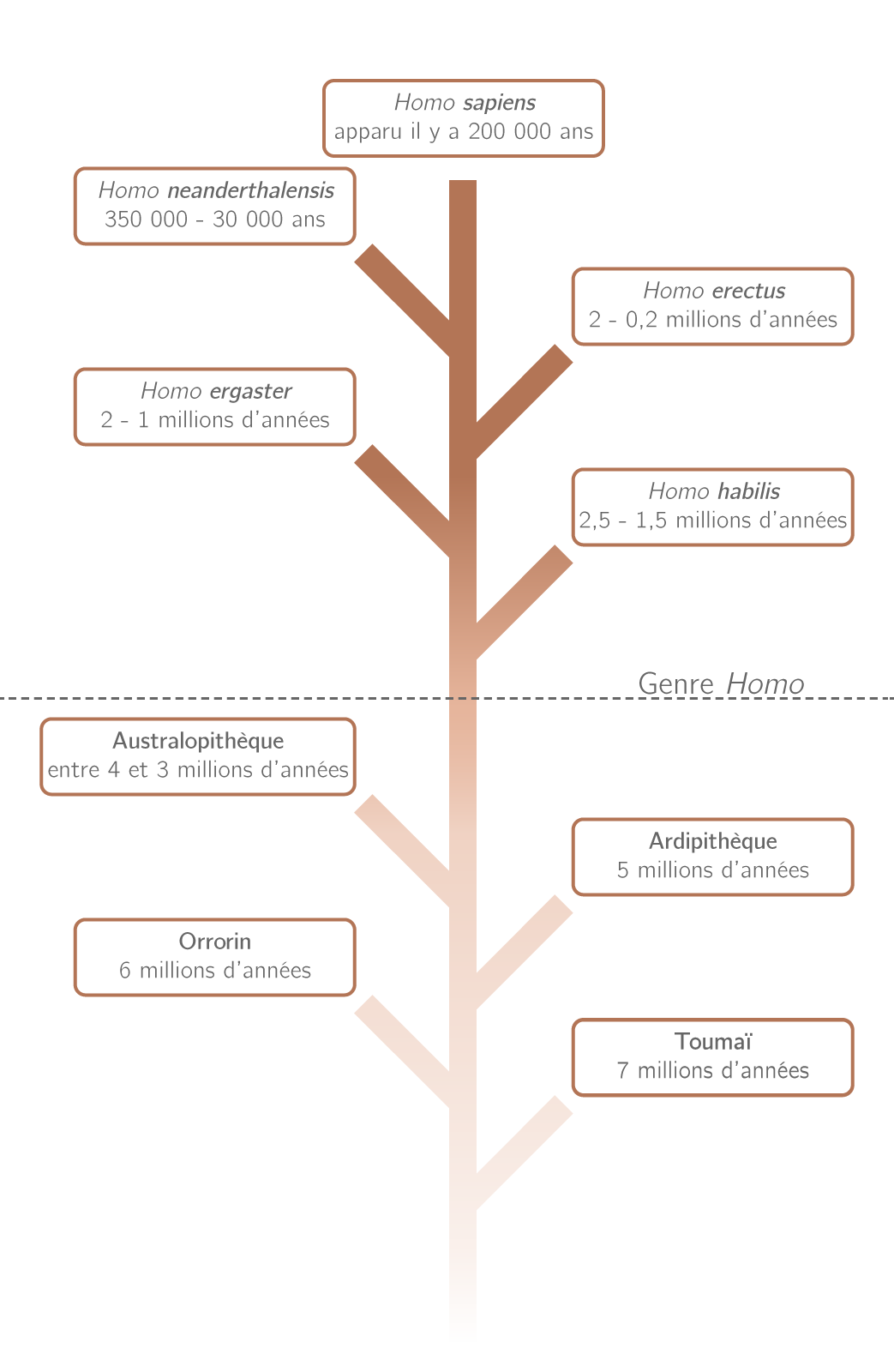 Les différentes espèces d'hominidés