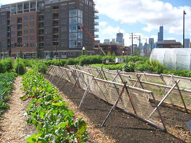 Agriculture urbaine à Chicago