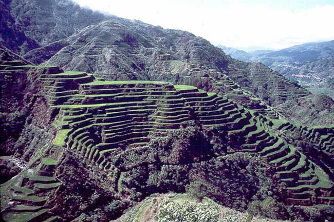 Culture du riz en terrasses (Philippines)