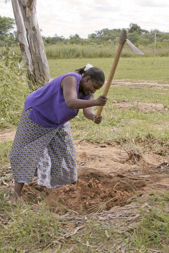 Agriculture vivrière en Zambie