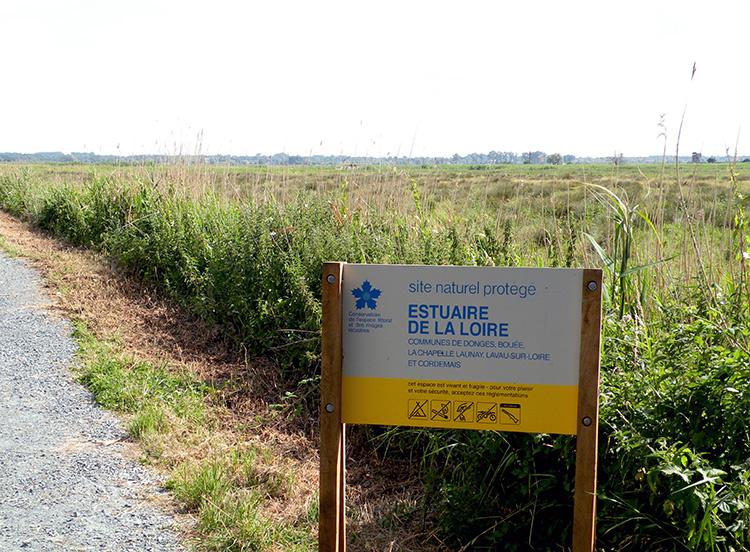 Les marais de l'estuaire de la Loire à Lavau-sur-Loire, propriété du Conservatoire du littoral