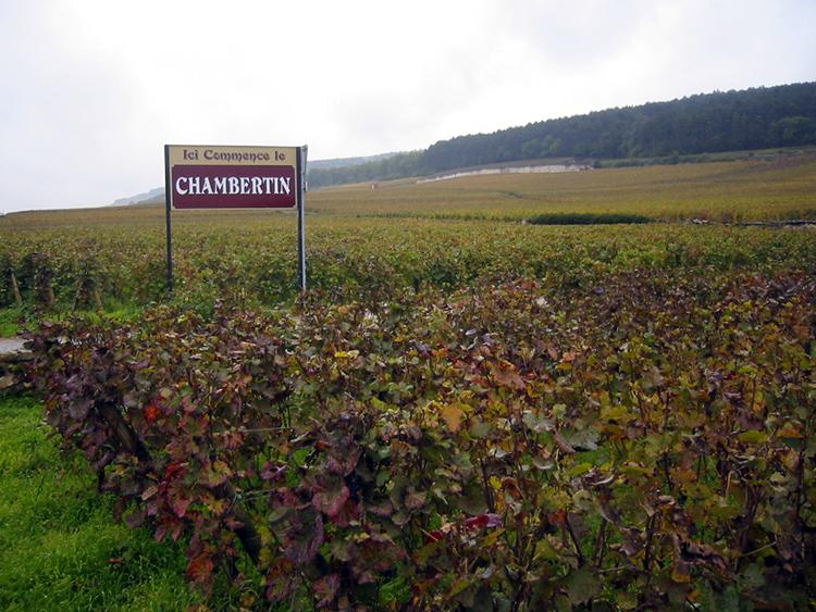Le terroir de Gevrey-Chambertin en Bourgogne
