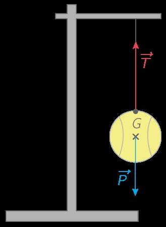 Équilibre d'une balle suspendue par un fil