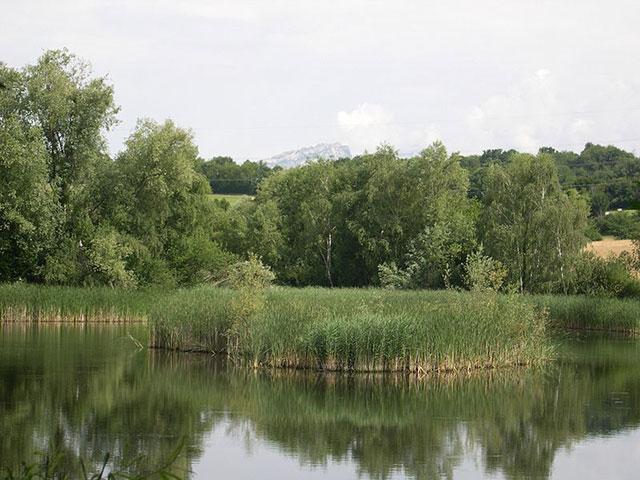 Un étang