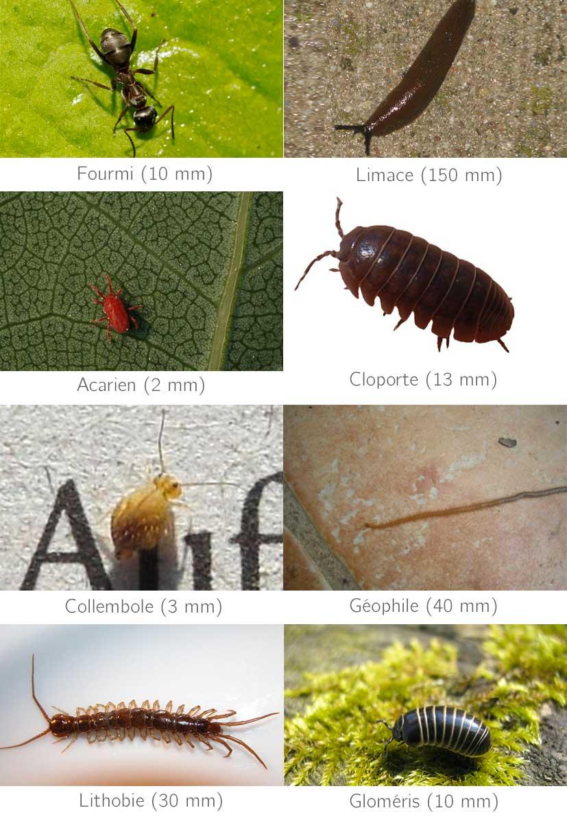 Des animaux du sol