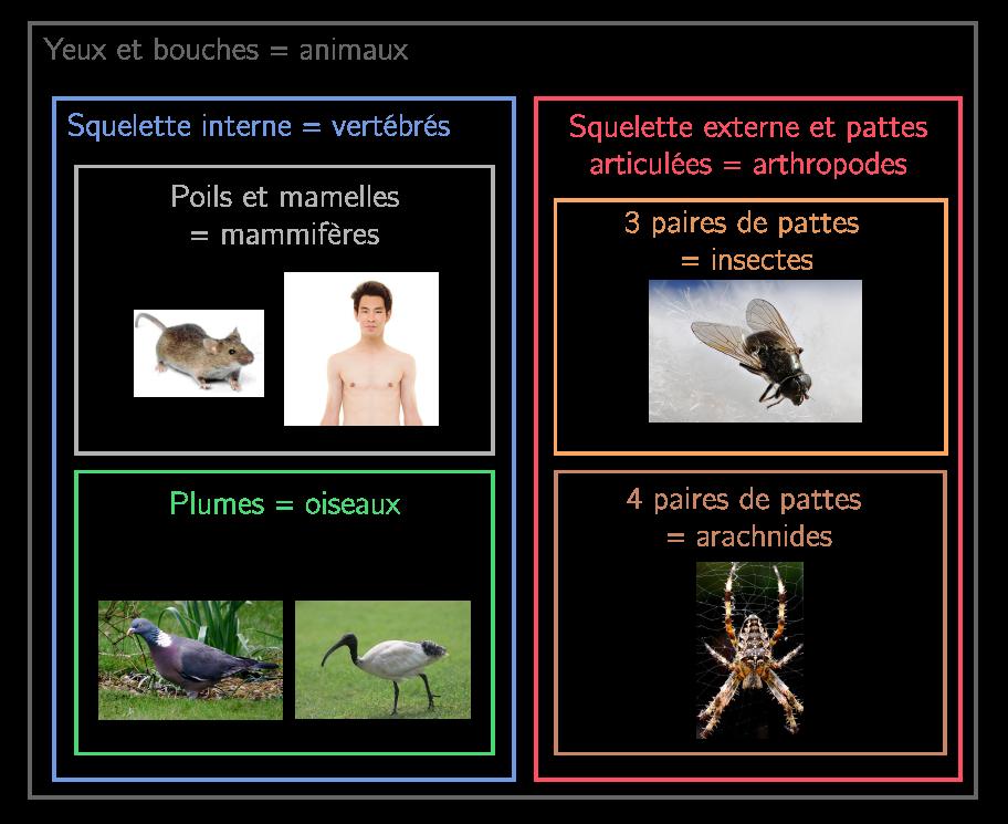 Classement des espèces en groupes emboîtés