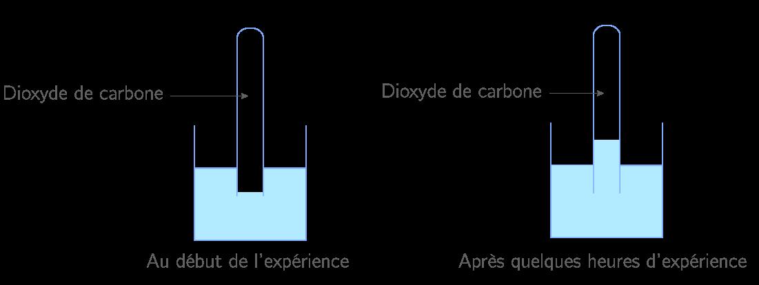 Dissolution du dioxyde de carbone dans l'eau