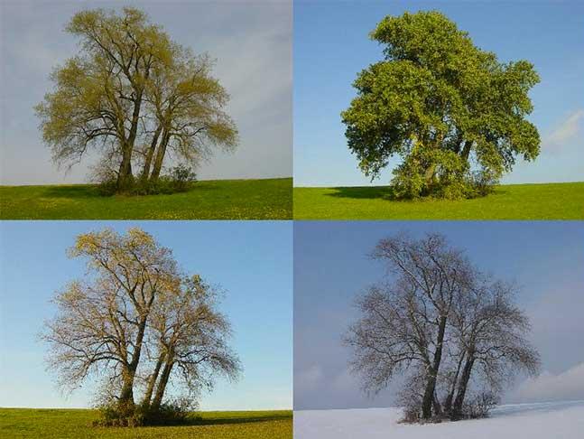 Un paysage vu pendant les quatre saisons