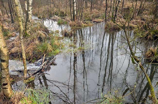 Lac créé par un barrage de castors