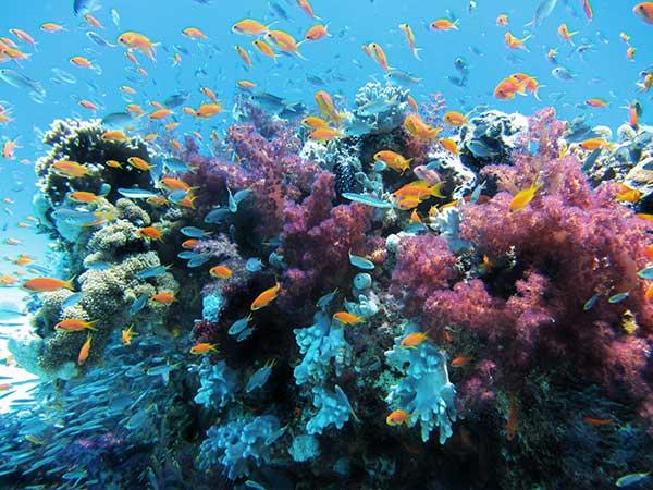 Photographie d'un récif corallien