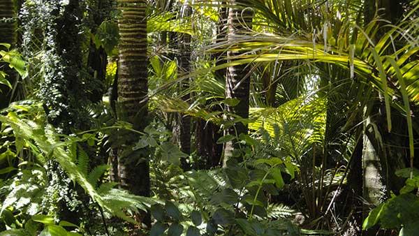 Photographie d'une forêt tropicale humide