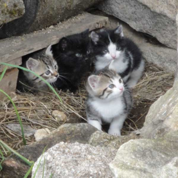 Une portée de chatons aux pelages différents