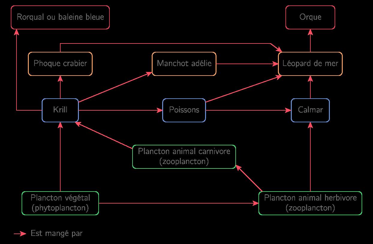 Schéma d'un réseau alimentaire marin
