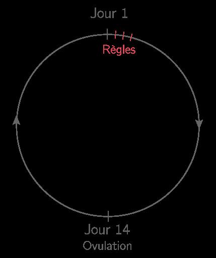 Schéma représentant un cycle chez la femme