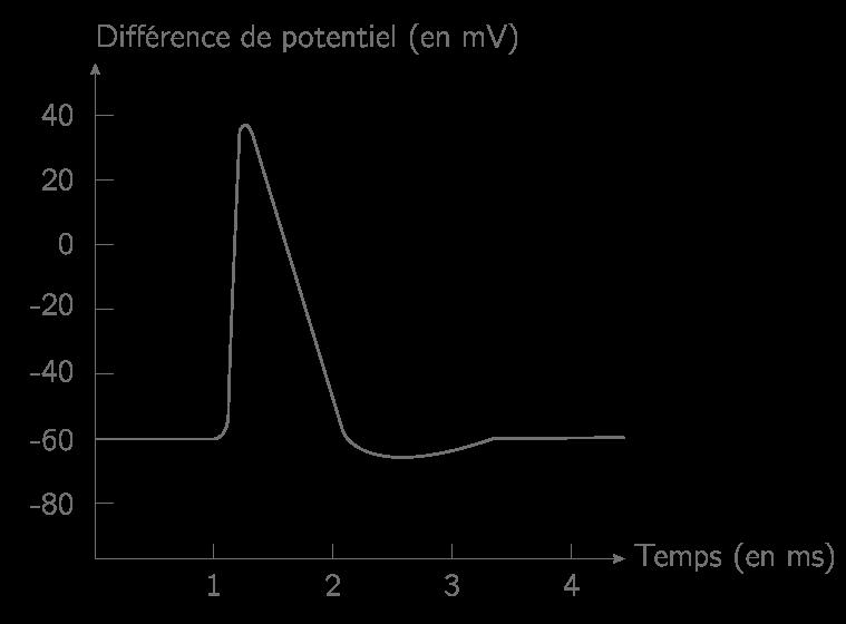 Enregistrement (électrique) d'un potentiel d'action à la surface d'une fibre nerveuse