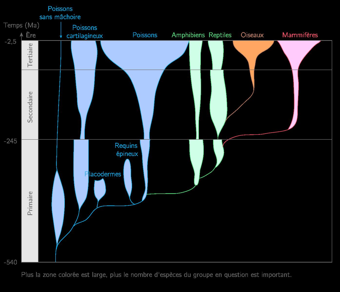 Arbre d'évolution simplifié des grands groupes de vertébrés