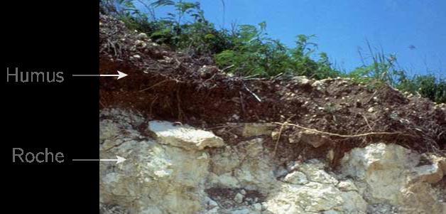 L'humus du sol