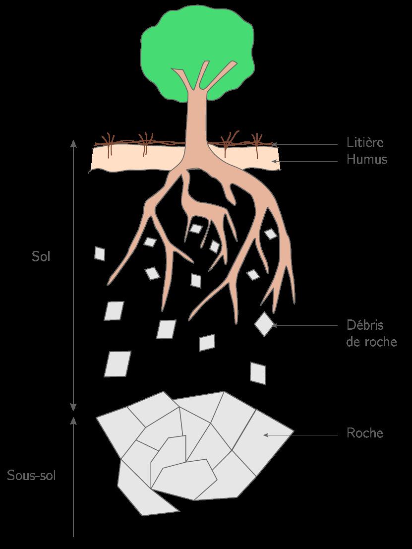 La coupe d'un sol sur un sous-sol